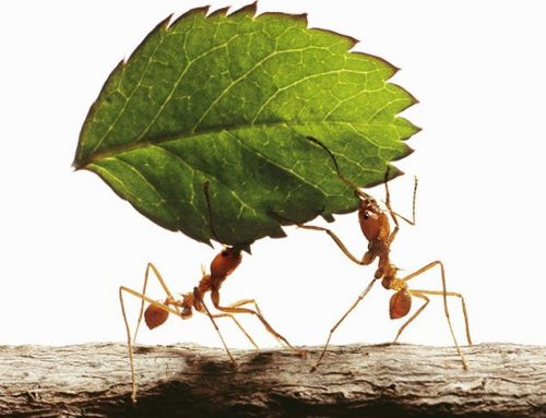 Be an Ant